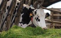 France : l'Etat va prendre en charge 40% des coûts de raccordement du Biogaz
