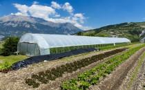 Gaz naturel biogaz biométhane GRDF WWF